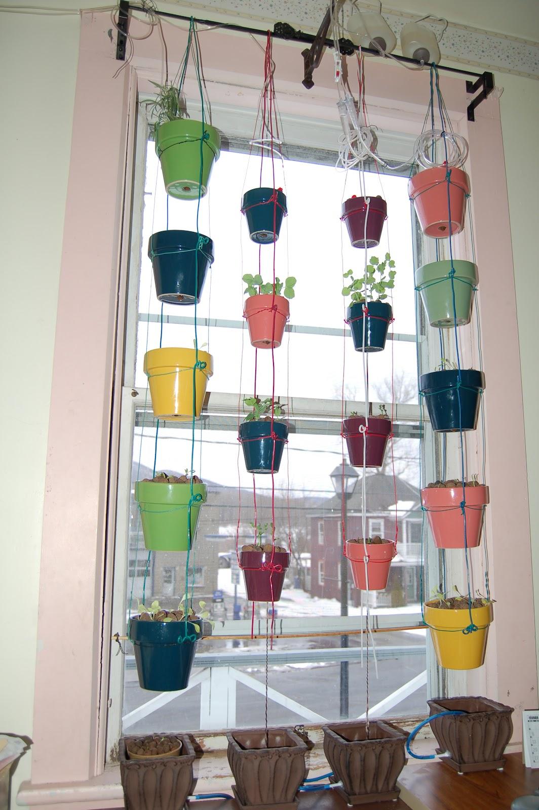 Mon agro fenêtre bâtie à la fin de lhiver 2010 11 elle est faite de pots de porcelaine sur cette photo elle avait été mise en fonction