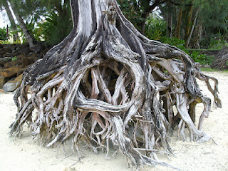 tree trunk roots washed ashore