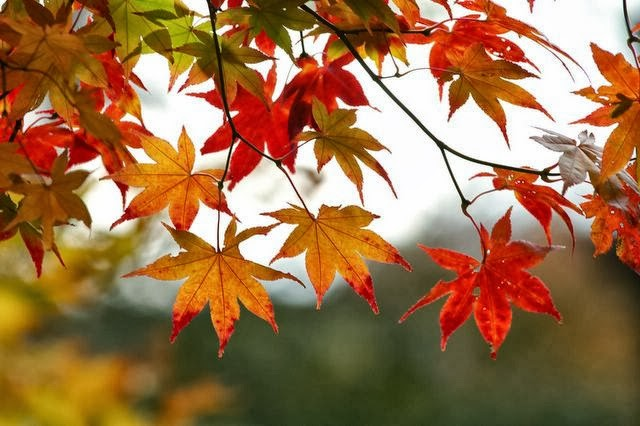 Adventurous With a Side of Brainy: Science Behind... Leaves Changing ...