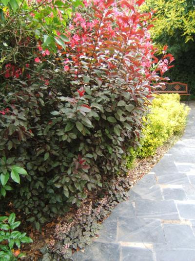 Arte y jardiner a plantar un seto campestre 4 etapas for Arbustos de jardin nombres