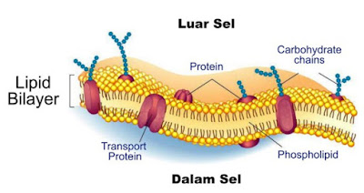 sel hewan dan fungsinya