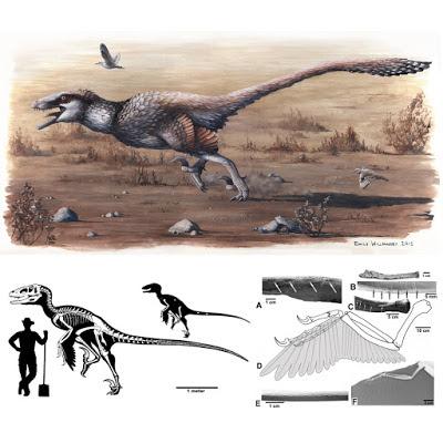 Dakotaraptor