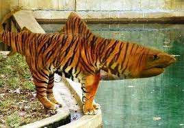 Fondos los invizimals - Tigershark invizimals ...