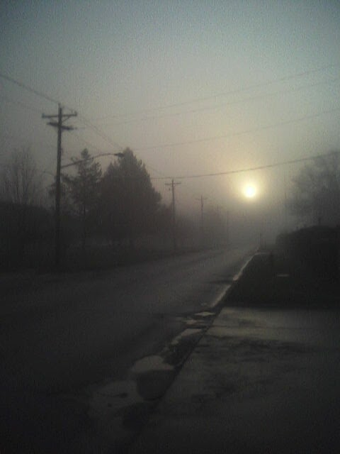 foggy morning scene of residential street
