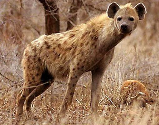 animales: los animales mas salvajes del mundo.: yeimyyesenia.blogspot.com/2014/10/los-animales-mas-salvajes-del...