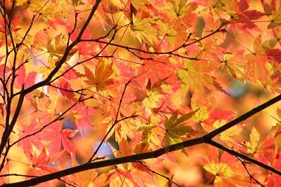 Autumn Begins1