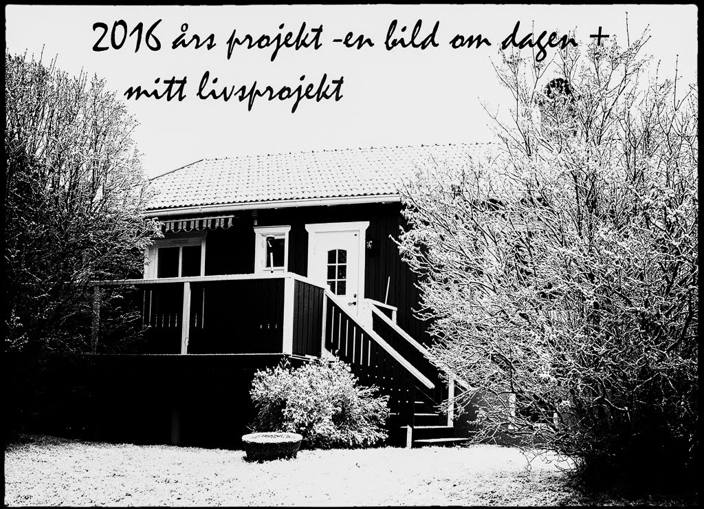 En bild om dagen 2016