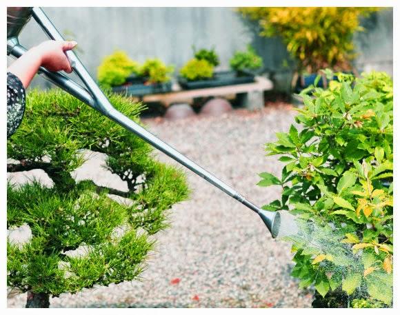 Flores e jardins plantas jardinagem e paisagismo o cultivo de bonsai - Cultivo de bonsai ...