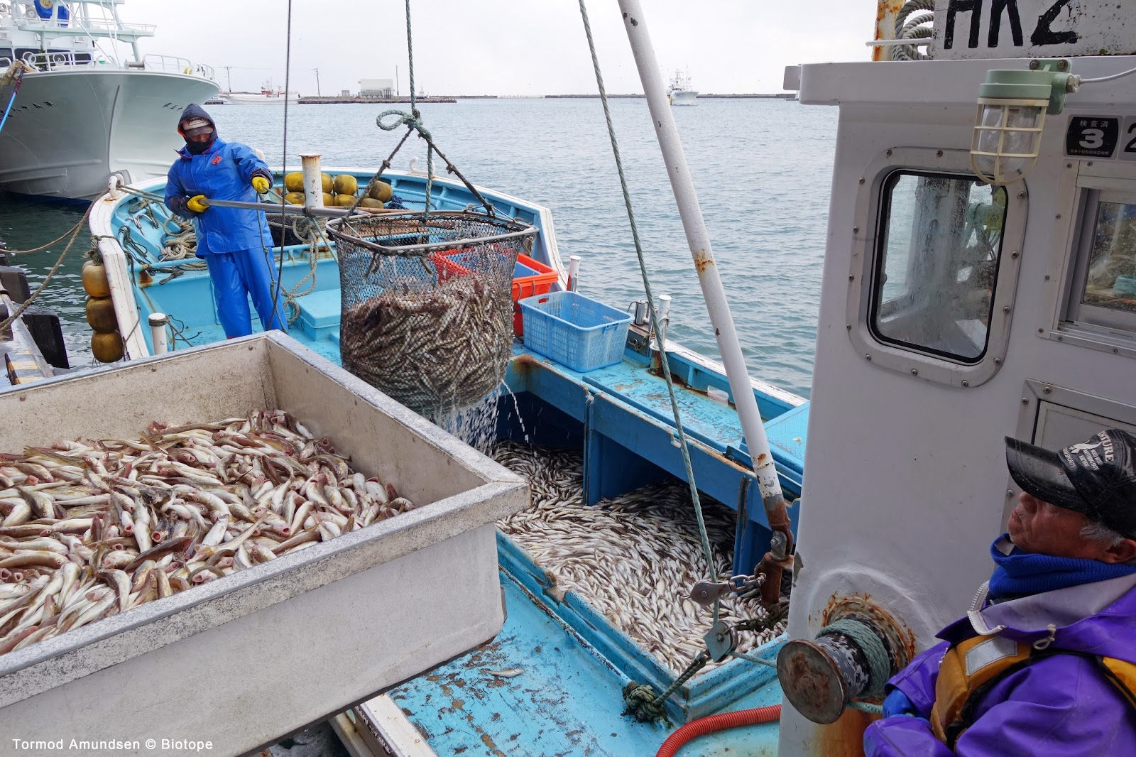 fishing industry Warming seas may scramble north america's fishing industry by david malakoff  may 16, 2018 , 5:55 pm get ready, seafood lovers: climate change may.