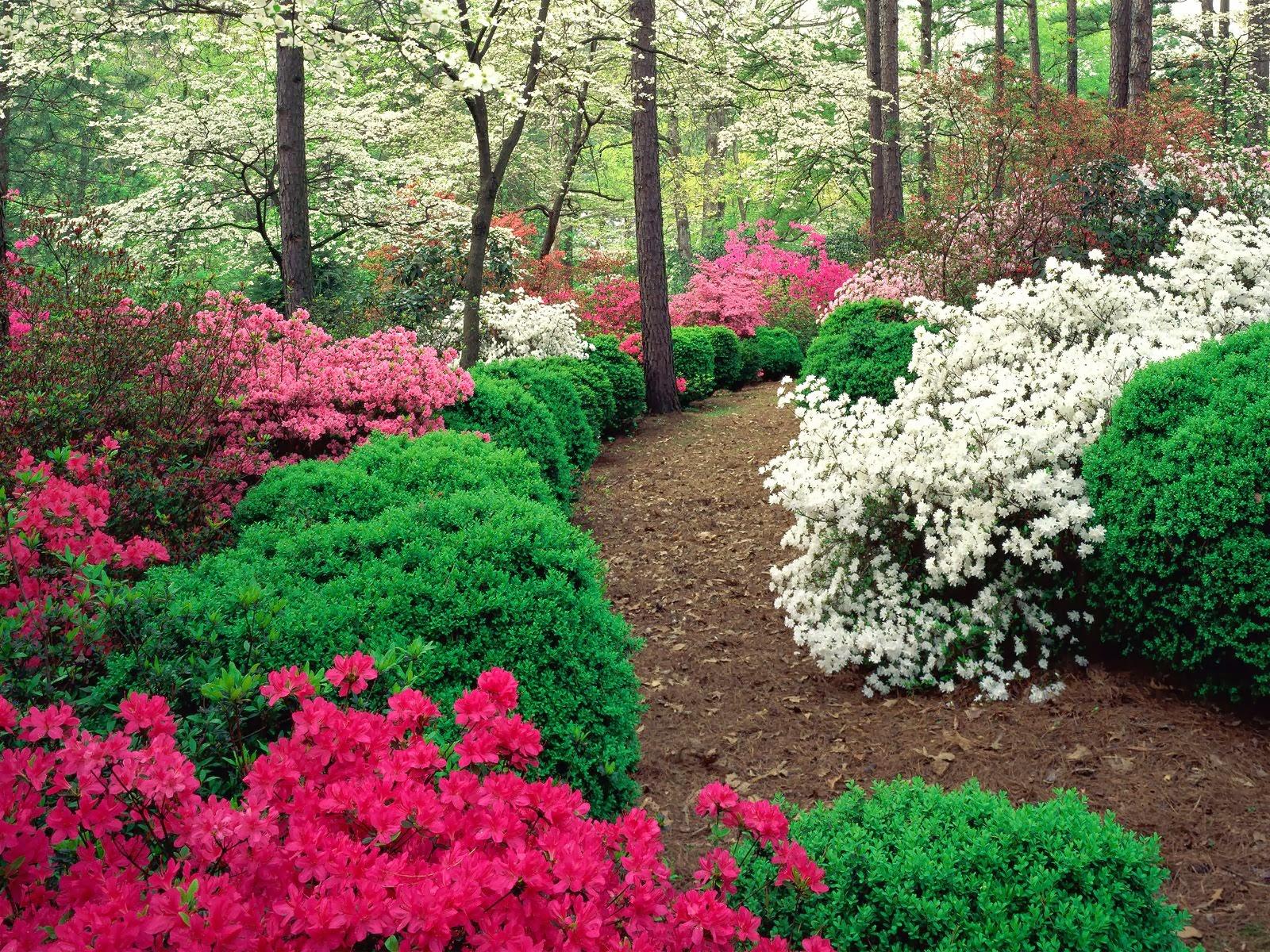 Garden Wallpaper Free Download Pic Gallery
