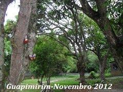 Guapimirim-Novembro- 2012