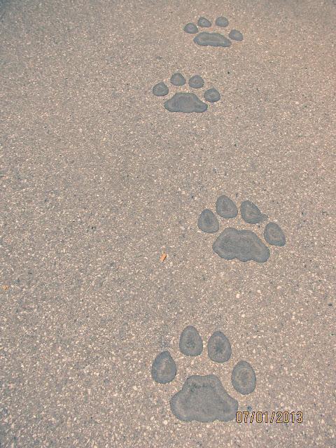 La Brea Tar Pits- Pawprints