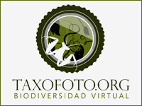 El Proyecto Taxofoto