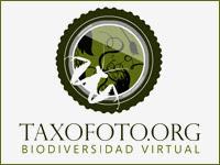 El Proyecto Taxofoto