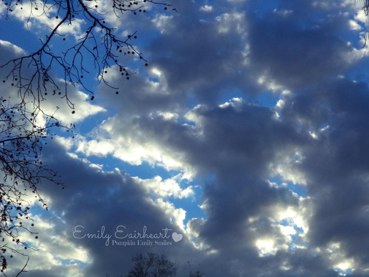 Clouds that look like a bird, a giraffe, and a dinosaur.