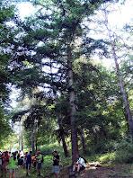 El Teix del Bosc