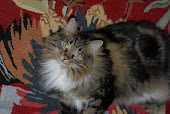 Miss Georgie (yes she's a Maine Coon)