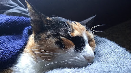 Millie dormida