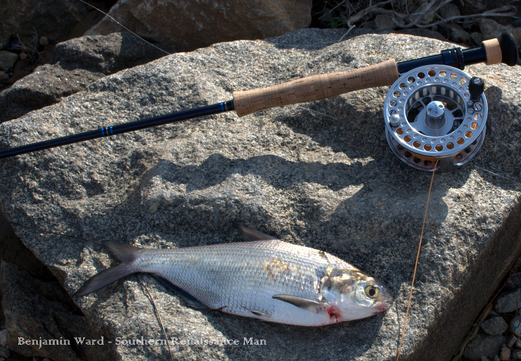Southern renaissance man james river fly fishing report 4 for James river fishing