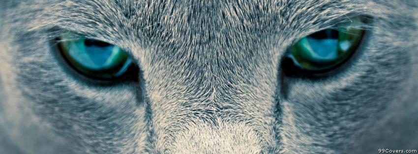 portadas de animales