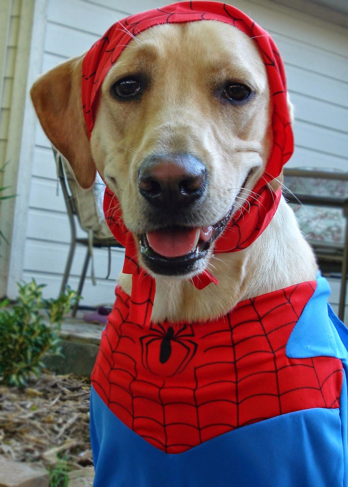 My Most Embarring Moment Should Be That I Dressed Her Up In A Dog Spiderman Costume For Ve Always Loved Theme