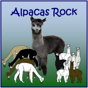 My Newest Website - Alpacas Rock