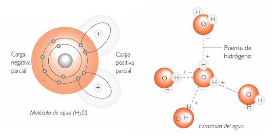 características molécula de agua