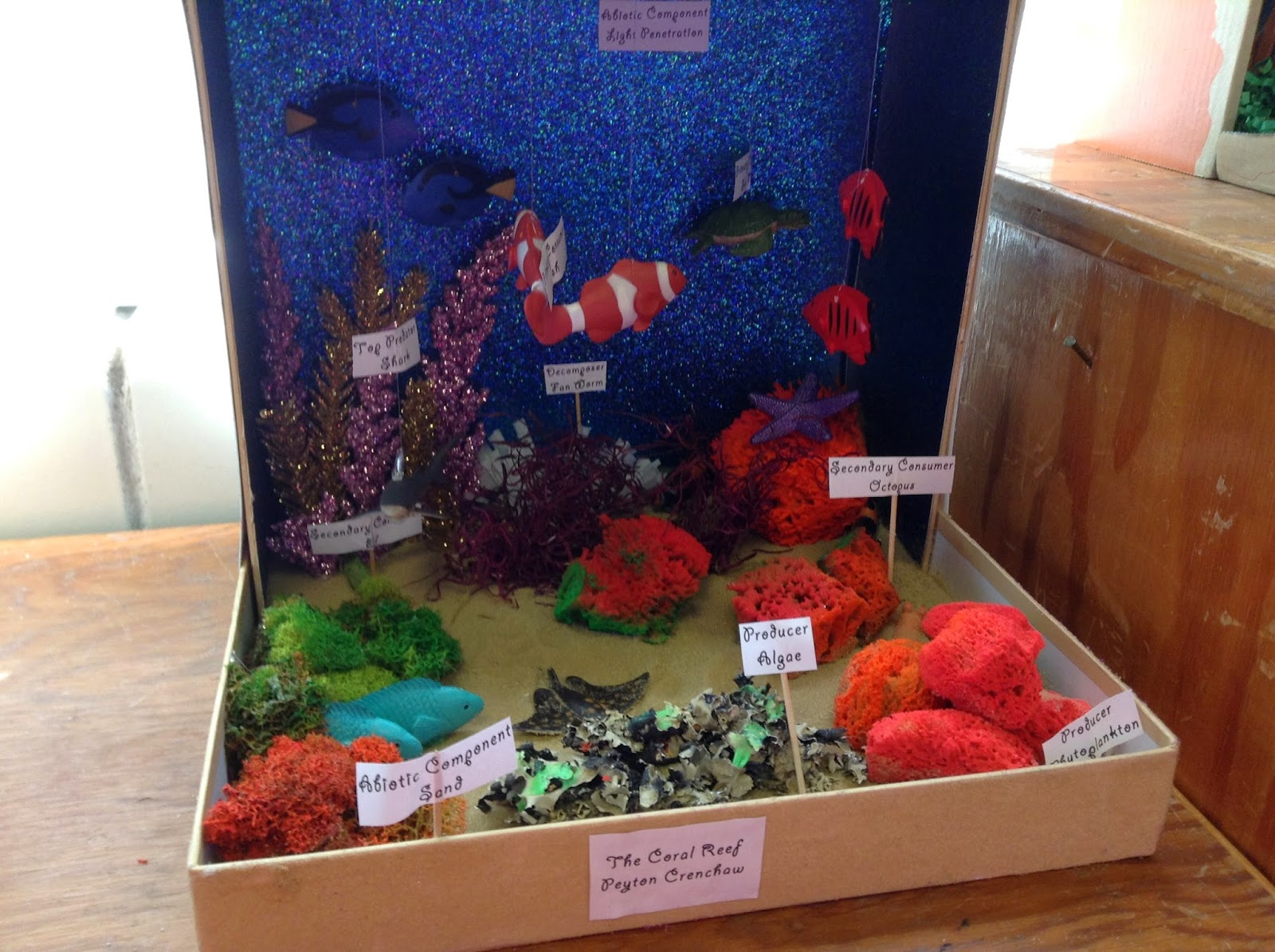 The cougars roar this diorama of the coral reef is made by peyton crenchaw this diorama is made with real toys and is realistic it also has lights along the top and a lot sciox Image collections