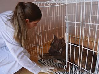 'Ele abanou o rabo quando fui medicar', relembra veterinária (Foto: Jonatas Boni/ G1)