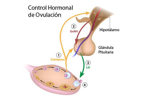 PROBLEMAS HORMONALES