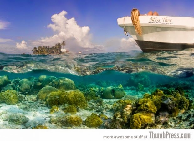 Coral reefs of South Water Caye, Belize picture