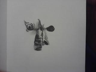 Bull Skull 2