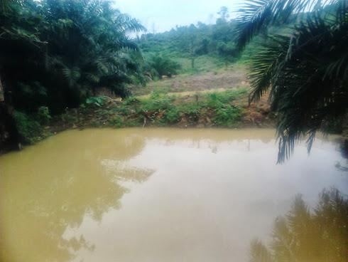 Kolam ikan nila di Saing Prupuk