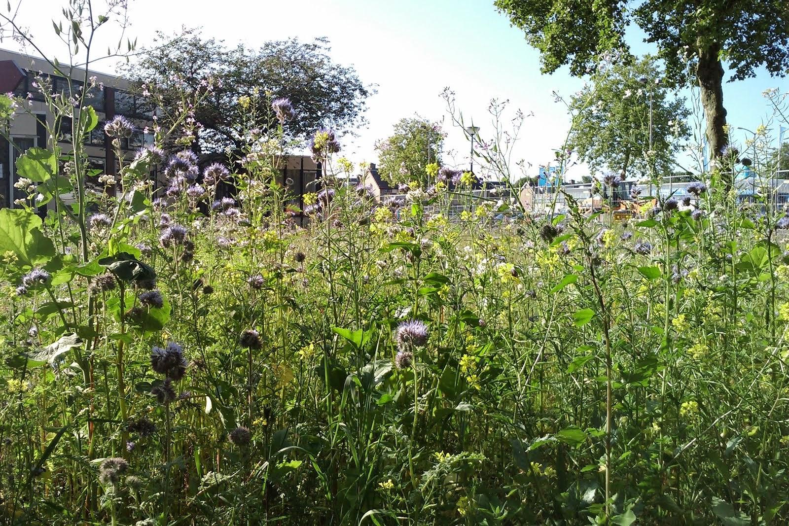 Een bijenlint: bloemen voor de bij