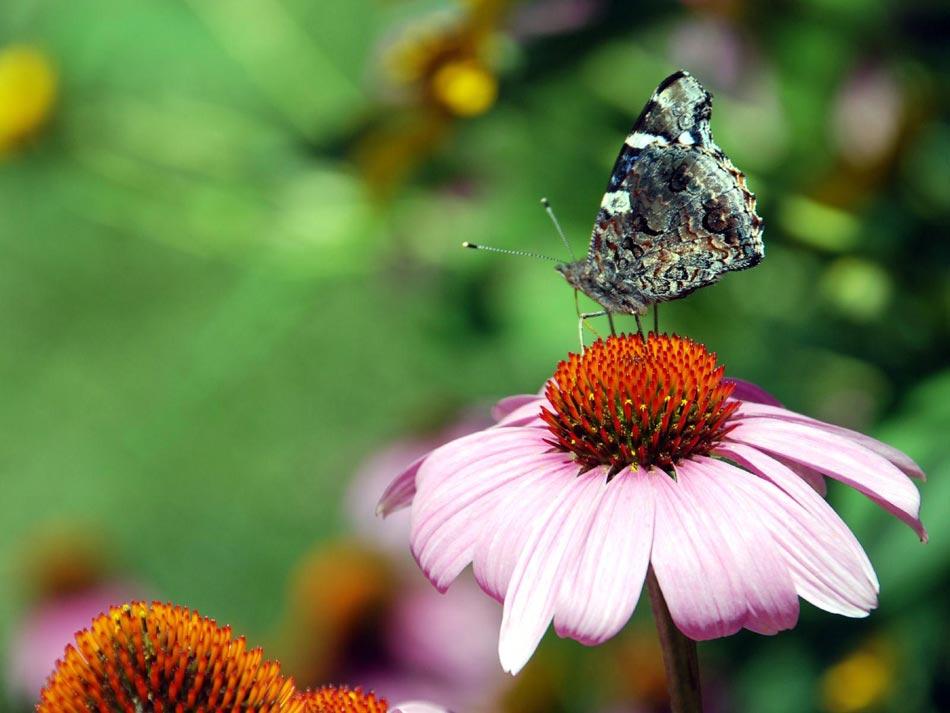 http://4.bp.blogspot.com/-M_Fdt9aAwkM/UX8E0SpqcNI/AAAAAAACNe8/XW_6JaBPnXE/s1600/imagens-lindas-imagens+(1).jpg