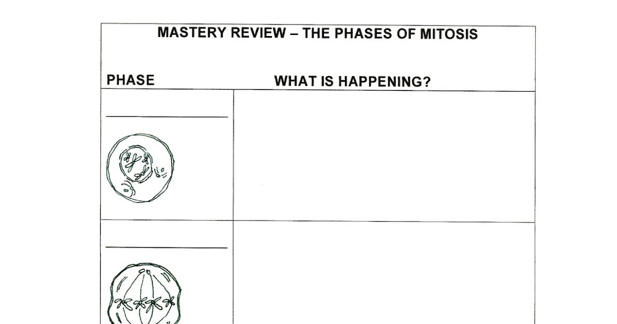 The Classy Teacher The One With Mitosis – Stages of Mitosis Worksheet
