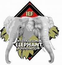 INTERNATIONAL ELEPHANT FOUNDATION