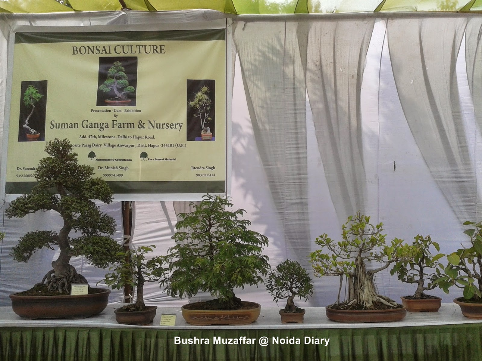 Bonsai at Noida Flower Show 2014
