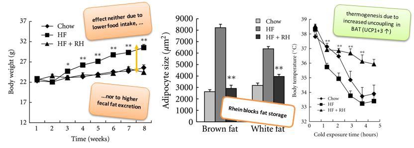Rhein, PPAR-Gamma Antagonist from Rhubarb, Blunts Diet Induced Weight Gain, Increases ...