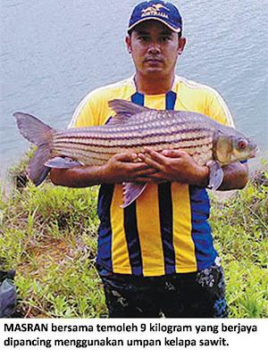 Ikan Probarbus Jullieni