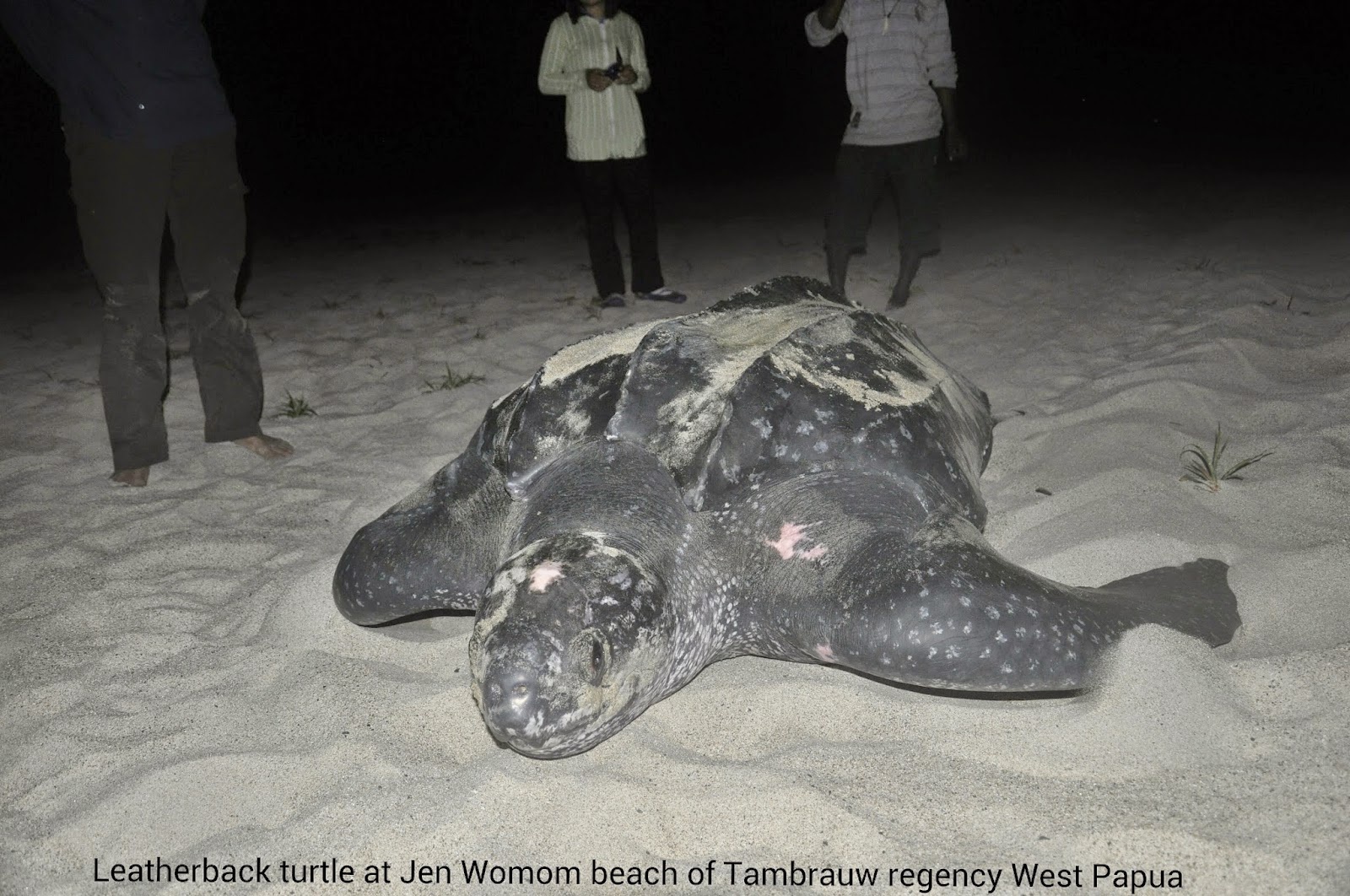 Leatherback Turtle Watching Tour
