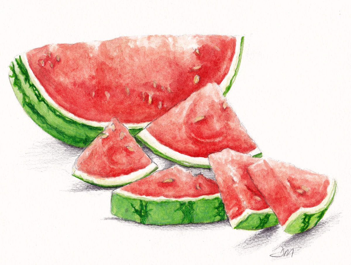 Image Result For Watermelon Sketch