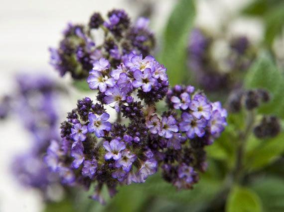 Garden sopelana mundo verde jardinarium flores de for Plantas temporada