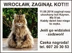 Uwaga Wroclaw- Zginal kot