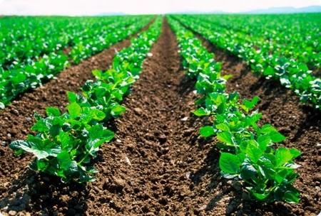 giovani imprenditori agricoli agevolaizoni