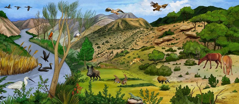 Ecosistema activo terrestre bio blog for Cuales son las caracteristicas de un mural