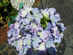 North Carolina Hydrangea's