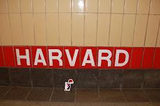 El catganer a Harvard.
