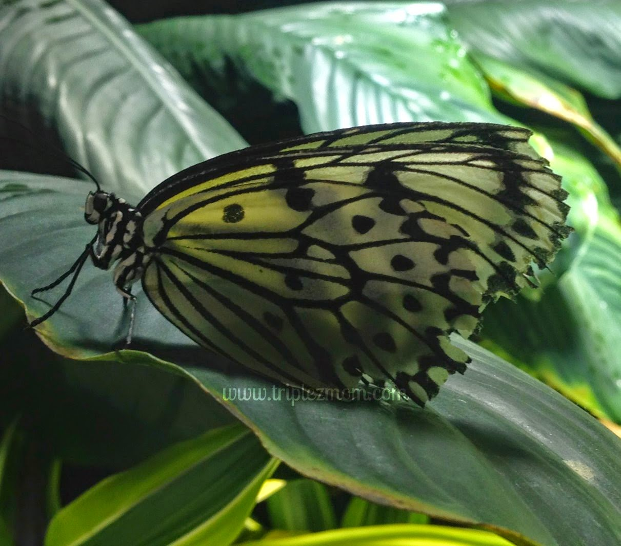 Gorgeous butterfly.