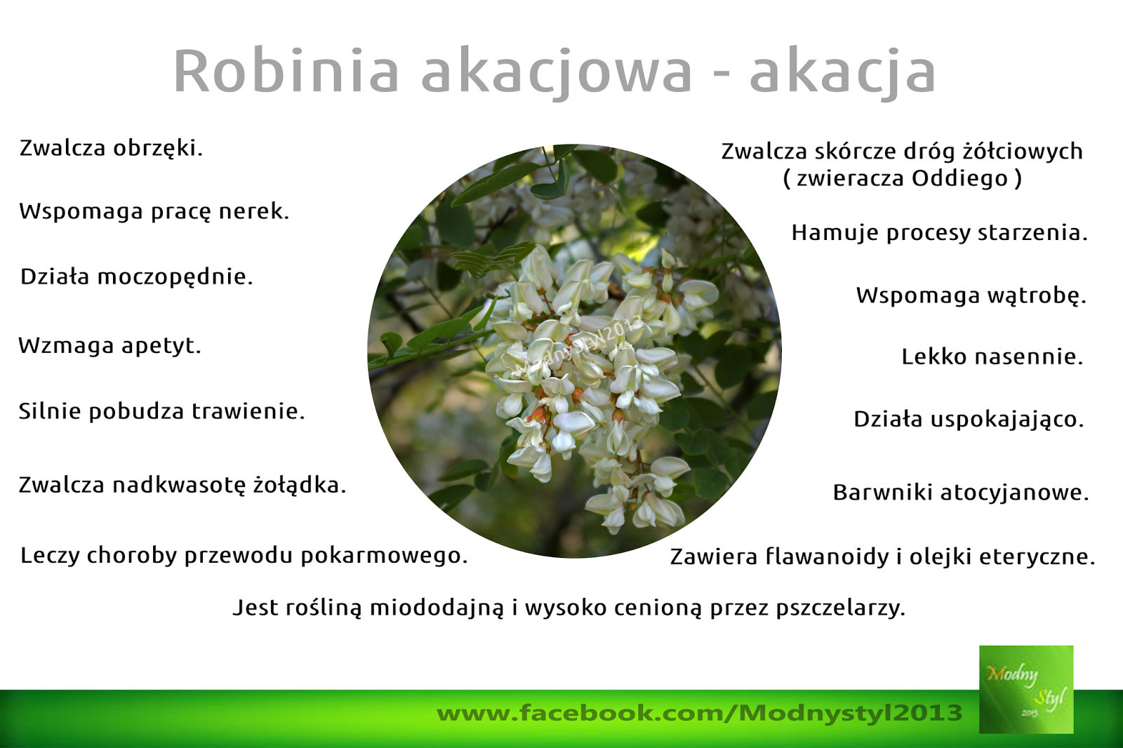 Robinia akacjowa czyli akacja